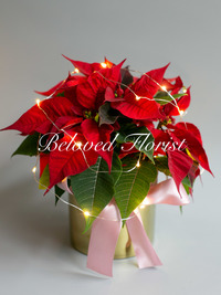 Red Christmas Flower Plants with LED light and golden pot.