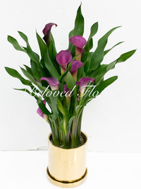 Purple Calla Lily Plant in Golden Pot