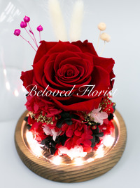 Single Red Preserved Rose in Glass Dome